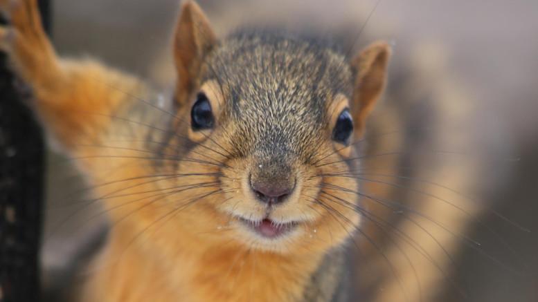 happy squirrel 3