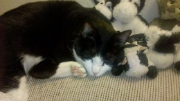 Rocky-sleeps-with-the-cows